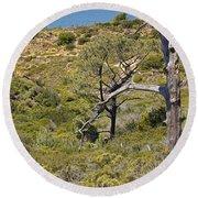Torry Pines Sentinal Round Beach Towel