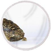 Tortoise Love Round Beach Towel