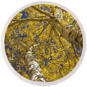 Towering Autumn Aspens With Deep Blue Sky Round Beach Towel