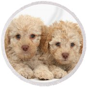 Toy Labradoodle Puppies Round Beach Towel