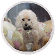 Toy Poodle Round Beach Towel