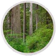 Trail Through Redwoods Round Beach Towel