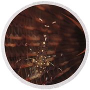 Transparent Shrimp On A Brown Feather Round Beach Towel