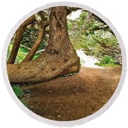 Tree And Trail Round Beach Towel