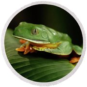 Tree Frog 1 Round Beach Towel