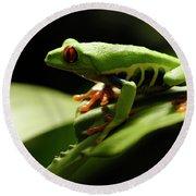 Tree Frog 13 Round Beach Towel