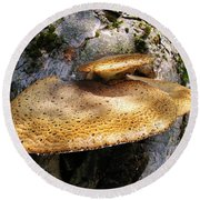 Tree Fungus 1 Round Beach Towel