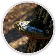 Tree Shelf Snow Sprinkled Fungus Round Beach Towel