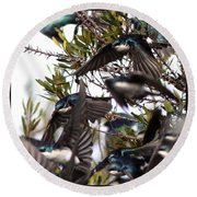 Tree Swallow - All Swallowed Up Round Beach Towel