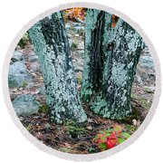 Tree Trio In Lichen At Hawn State Park Round Beach Towel