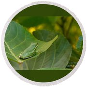 Treefrog Resting Round Beach Towel