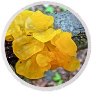 Tremella Mesenterica - Yellow Brain Fungus Round Beach Towel