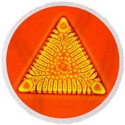 Triceratium Round Beach Towel by M. I. Walker