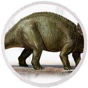 Triceratops Prorsus, A Prehistoric Era Round Beach Towel