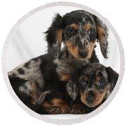 Tricolor Dachshund Puppies Round Beach Towel