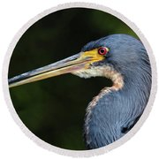 Tricolor Heron Portrait Round Beach Towel
