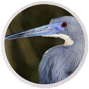 Tricolored Heron Round Beach Towel