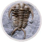 Trilobite Round Beach Towel