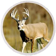 Trophy Buck Round Beach Towel