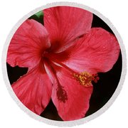 Tropical Beauty Of Florida Round Beach Towel
