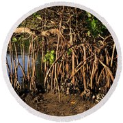 Tropical Mangroves Round Beach Towel