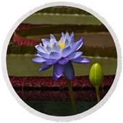 Tropical Water Lilies Round Beach Towel