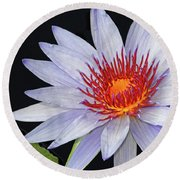 Tropical Waterlily Round Beach Towel