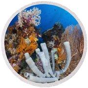 Tube Sponge On Coral Reef In Raja Round Beach Towel