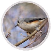 Tufted Titmouse - On The Slope Round Beach Towel