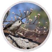 Tufted Titmouse - Bird - Color In Shadows Round Beach Towel