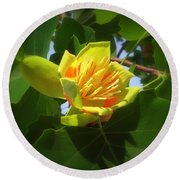 Tulip Poplar Flower Round Beach Towel