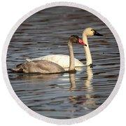 Tundra Swan And Cygnet Round Beach Towel