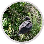 Black Vulture - Buzzard Round Beach Towel