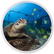 Turtle And Sealife Round Beach Towel