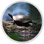 Turtle I Round Beach Towel