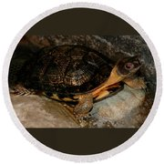 Turtle Time On The Rocks Round Beach Towel