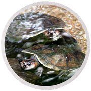 Turtle Two Turtle Love Round Beach Towel