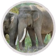 Twin Elephants Round Beach Towel
