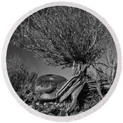 Twisted Beauty - Bw Round Beach Towel by Christopher Holmes
