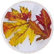 Two Autumn Maple Leaves  Round Beach Towel