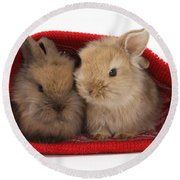 Two Baby Lionhead-cross Rabbits Round Beach Towel