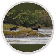 Two Bull Moose In Maine Round Beach Towel