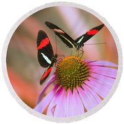 Two Colorful Butterflies On Cone Flower Round Beach Towel