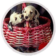 Two Dalmatian Puppies Round Beach Towel