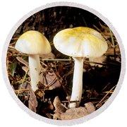 Two Death Cap Mushrooms Round Beach Towel