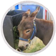 Two Donkeys Eating Round Beach Towel by Donna Munro