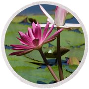 Two Graceful Water Lilies Round Beach Towel