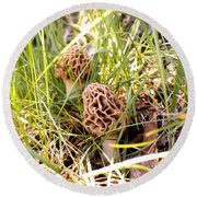 Two Morels Round Beach Towel