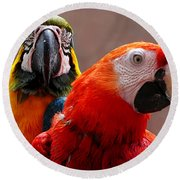 Two Parrots Closeup Round Beach Towel