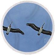 Two Pelicans In Flight Round Beach Towel